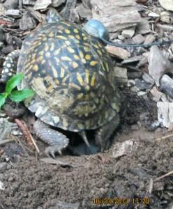 laying-eggs-closeup