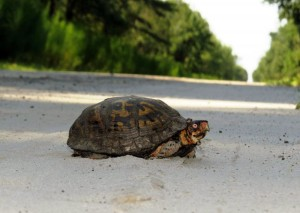 turtle-16
