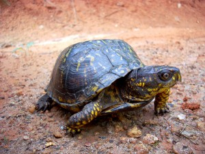 turtle-20