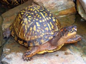 turtle-21