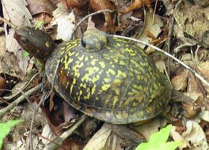 turtle-23