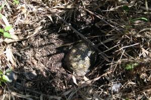 turtle-9