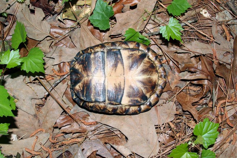 turtle-10