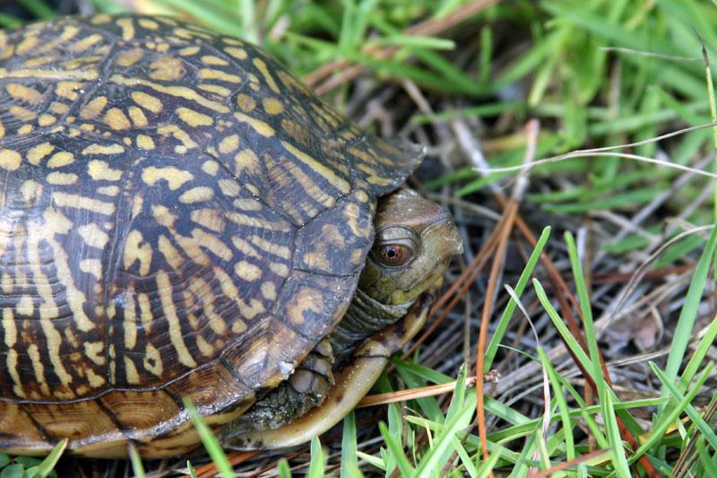 turtle-13
