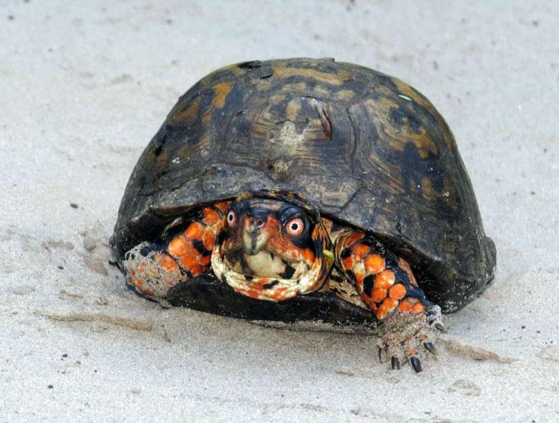 turtle-17