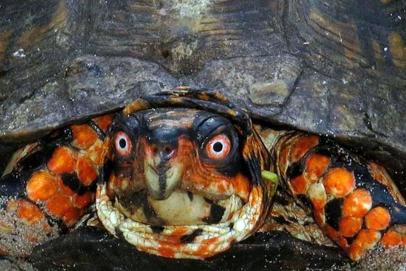 turtle-18