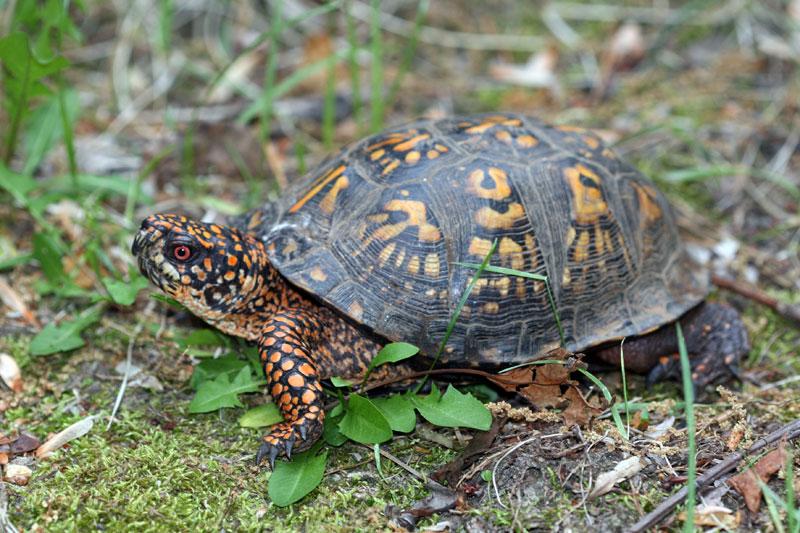 turtle-6